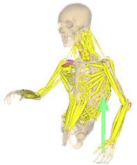 使用ソフトウェア:nMotion musculous