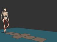 SIMMによる筋骨格モデルのアニメーション
