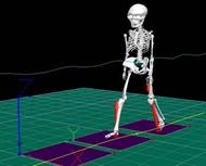 Visual 3Dによる骨格モデルのアニメーション