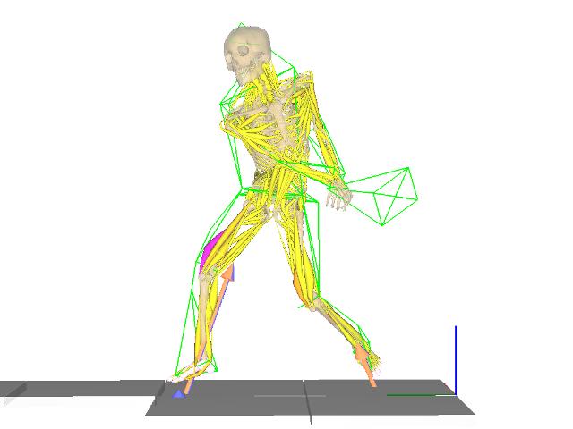nMotion musculousによる動作解析イメージ