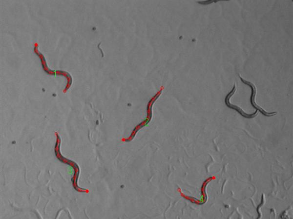 精子の動作解析