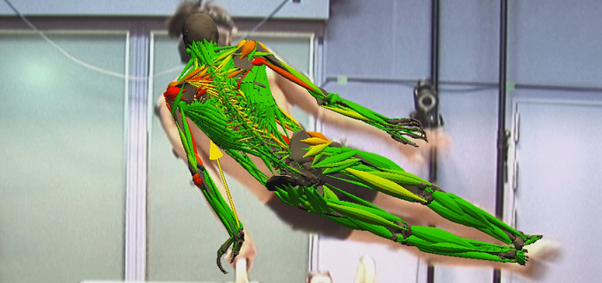 筋骨格モデルの研究