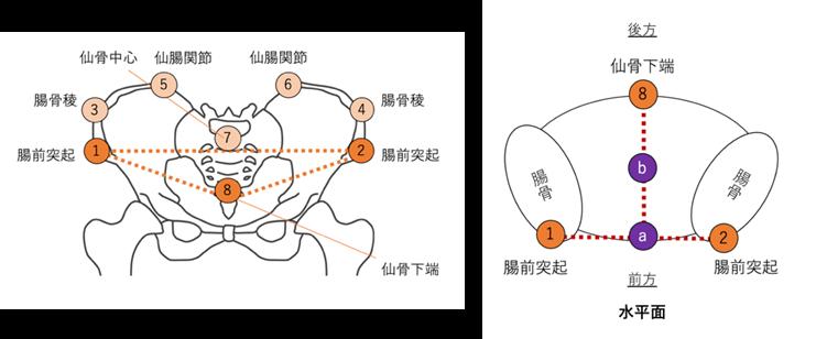 日本舞踊の研究|ユーザー事例
